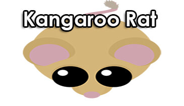 Photo of Mope.io Kangaroo Rat Guide